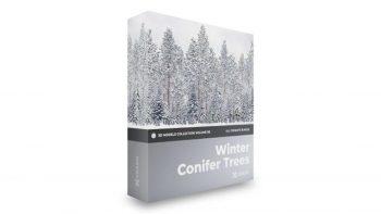 دانلود مدل سه بعدی درخت کاج