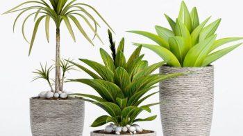 دانلود آبجکت گل و گیاهان زینتی