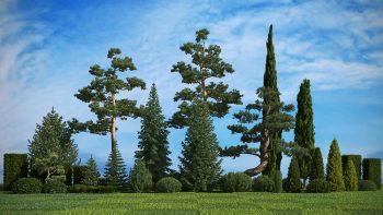 دانلود آبجکت درخت فضای سبز