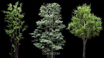 دانلود پرسوناژ درخت فضای سبز