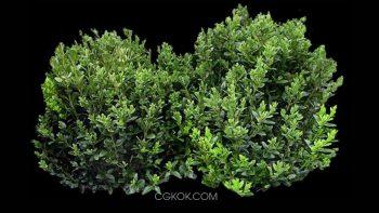 دانلود پرسوناژ درختچه و بوته گیاهان
