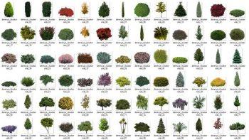 دانلود تصاویر دو بعدی درخت و بوته