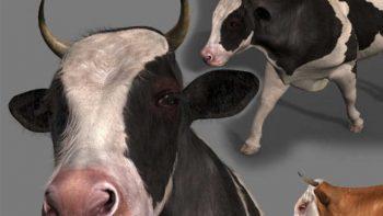 دانلود مدل سه بعدی گاو انیمیت شده
