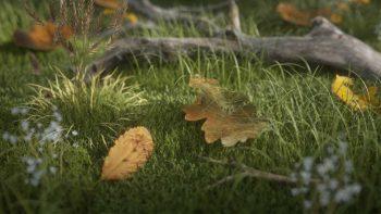 دانلود شیدر برگ درخت برای سینما فوردی