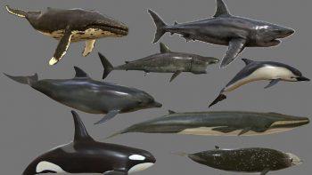 دانلود آبجکت حیوانات دریایی از CGTrader