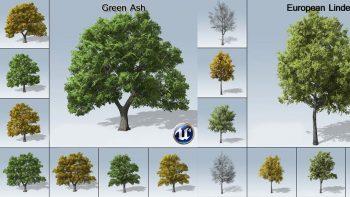 دانلود مدل سه بعدی درخت برای آنریل انجین