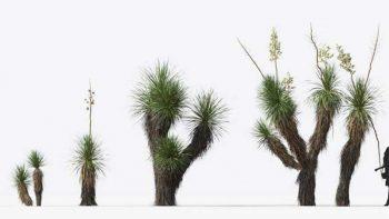 دانلود آبجکت کاکتوس و گیاهان کویری