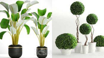 دانلود مدل سه بعدی گل و گیاهان زینتی