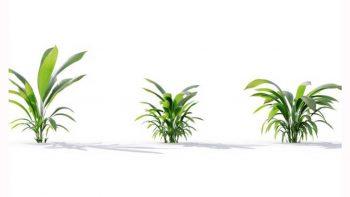 دانلود آبجکت گیاهان زینتی و گلخانه ایی