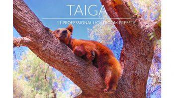 پریست عکس جنگلی برای لایتروم – Taiga Lr Presets