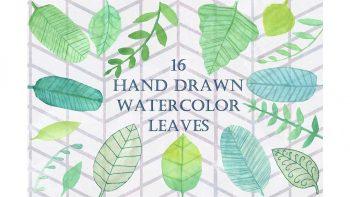 دانلود کلیپ آرت برگ آبرنگی Handpainted Watercolor Leaves