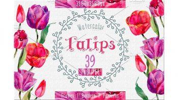 دانلود کلیپ آرت آبرنگی گل لاله Tulips PNG watercolor flower set