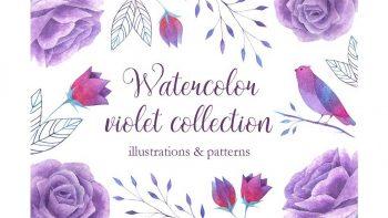 دانلود کلیپ آرت آبرنگی گل بنفش Watercolor violet collection