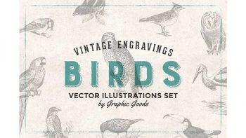 دانلود وکتور پرنده Birds Engravings Set