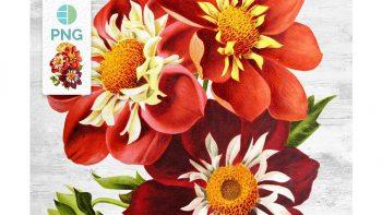دانلود کلیپ آرت گل Florals: Vintage Dahlias