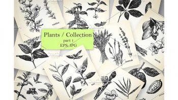 دانلود کلیپ آرت گل و گیاه Plants / Collection