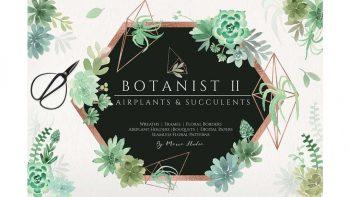 دانلود کلیپ آرت گیاهان سبز Botanist II – Airplants & Succulents
