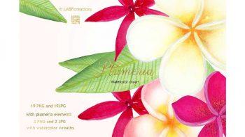 دانلود کلیپ آرت گل های گرمسیری Plumeria Tropical watercolor flowers