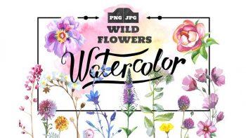 دانلود وکتور آبرنگی گل های وحشی Wild Flowers watercolor PNG set