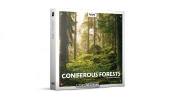 دانلود مجموعه افکت صوتی جنگل های سوزنی برگ