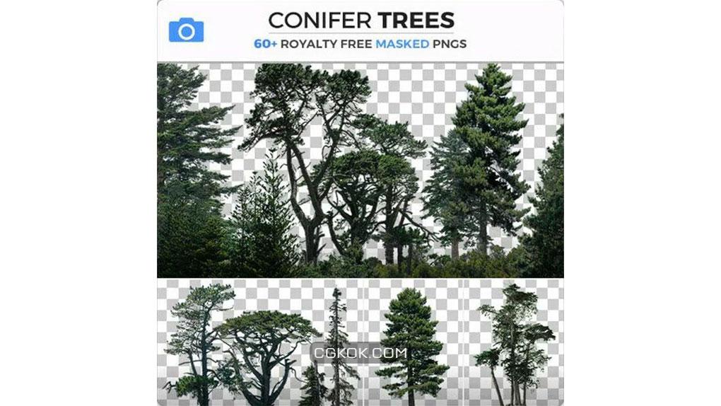 تصاویر رفرنس از درختان مخروطی