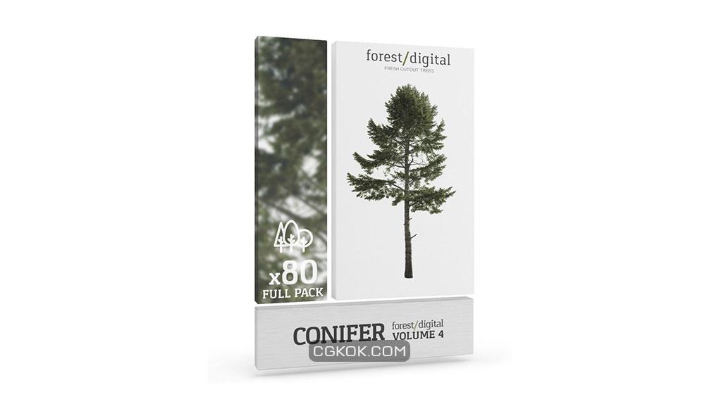 تصویر کات اوت درختان مخروطی