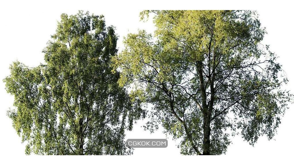 تصاویر کات اوت درختان