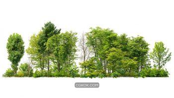 دانلود تصویر کات اوت درخت و درختچه