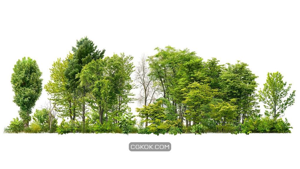 تصویر کات اوت درخت و درختچه