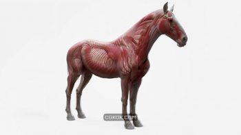 دانلود مدل سه بعدی اسب از 3D Scan Store
