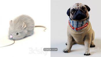 دانلود مدل سه بعدی حیوانات