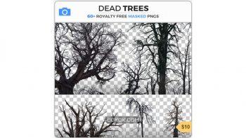 دانلود تصاویر رفرنس درختان مرده