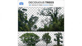 دانلود تصاویر رفرنس درختان برگریز