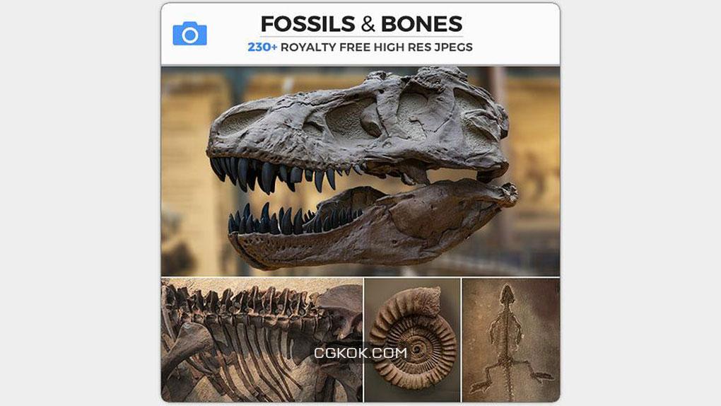 تصاویر رفرنس فسیل و استخوان
