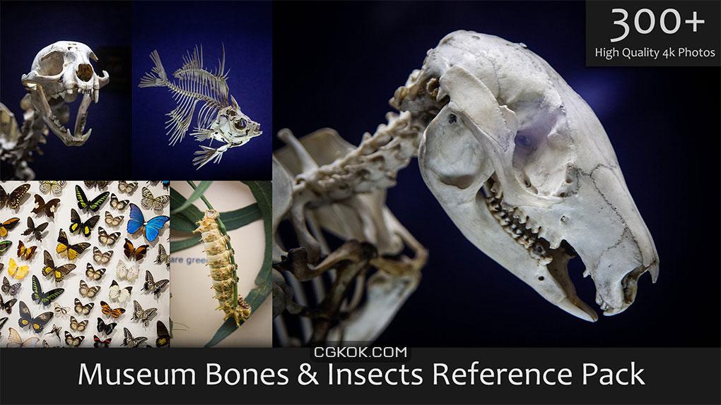 تصاویر رفرنس حشرات و استخوان های موزه
