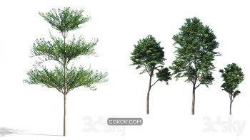 دانلود 60 مدل سه بعدی درخت از Pro 3DSky – مجموعه اول