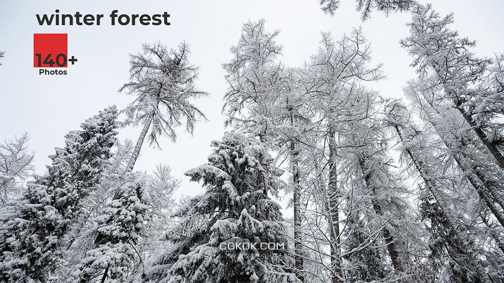 تصاویر رفرنس محیط جنگل زمستانی