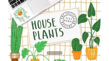 دانلود کلیپ آرت و پترن گل و گیاه HOUSEPLANTS – PNG & Patterns Pack